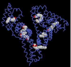 Albumin-300x281-1